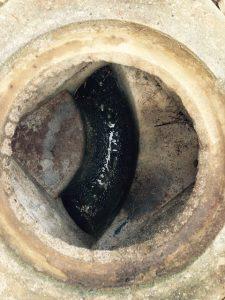 野田市Y様宅排水マス清掃完了画像